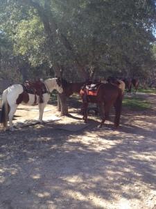 Wooohooo Horses